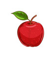 red apple with leaf isolated veggie food sketch vector image