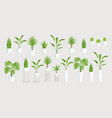 set home flowers in a pots vector image