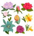 beautiful watercolor handmade flower vector image