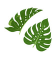 tropical palm leaves isolated vector image