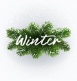 calligraphic writing winter on christmas branches vector image