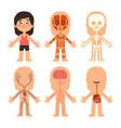 cartoon girl body anatomy woman veins organs vector image