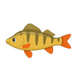 perch fish on a white background vector image