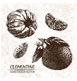 digital detailed clementine hand drawn vector image vector image