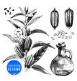 hand drawn sesame set - plant seeds and oil vector image vector image
