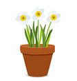 spring narcissus flowers background vector image