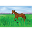 the wild brown horse grazes on the meadow vector image vector image