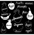 fruit logo vector image