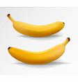 banana realistic set yellow banana vector image vector image