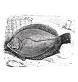 Flounder vintage engraving vector image vector image