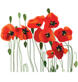 red poppies vector image vector image