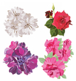 Spring Summer Flower Set vector image vector image