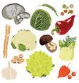 vegetables on white background vector image