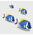 Blue tropical fish small and closeup isolated vector image