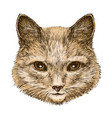 portrait of a fluffy cat sketch vintage vector image vector image