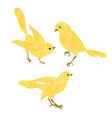 singing gold birds canary vintage set two vector image vector image