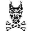 dog head in spiked collar and two crossed bones vector image