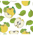 Quince with leaves pattern on transparent backgrou vector image vector image