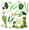 set ripe green vegetables vector image