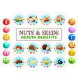 vitamin complex in healthy nuts grains and seed vector image