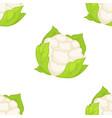 cauliflower vegetable seamless pattern organic vector image vector image
