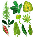 colorful and exotic set tropical leaves vector image