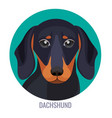 dachshund dog with black fur in various positions vector image vector image
