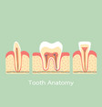 group of tooth vector image vector image