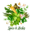 spice herbs and seasonings vector image vector image