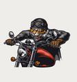 colorful concept aggressive tiger biker vector image