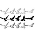 flying pigeons set vector image vector image
