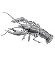 high detail lobster engraving vector image vector image