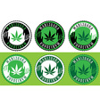 Medical cannabis leaf symbol design stamps vector image vector image