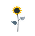 ripe sunflower cartoon sketch with big blossom and vector image