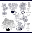 set different house plants on white background vector image vector image