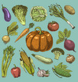 set of hand drawn engraved vegetables vegetarian vector image vector image