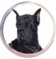 sketch domestic dog black Great Dane breed vector image