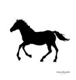 black silhouette running foal vector image vector image
