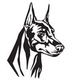 decorative portrait dog dobermann vector image vector image