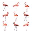 Flamingo birds pattern vector image vector image