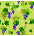 grapes pattern on olive background vector image
