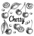 cherry set hand drawn vector image
