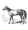 Arabian Horse vintage engraving vector image vector image