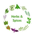cartoon color herbs spices banner card circle vector image