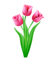 bouquet three pink cartoon tulips vector image