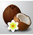 Coconut tropical nut fruit vector image