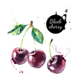 Hand drawn painting black cherry on white vector image vector image