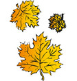 maple leaf isolated on white background autumn vector image vector image