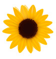 One sunflower vector image