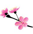 Sakura vector image vector image